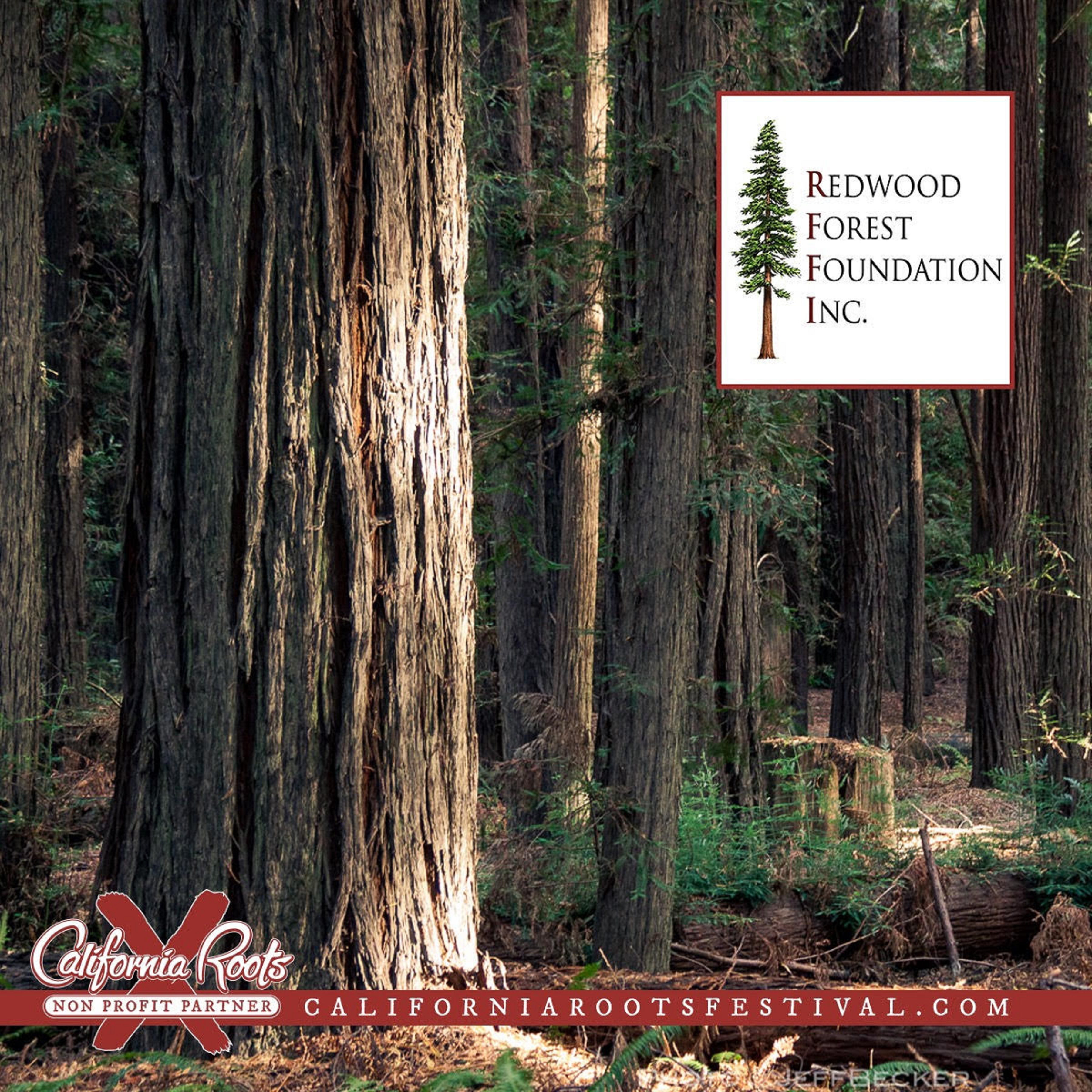 California Roots Music And Arts Festival Continues Its Partnership With Redwood Forest Foundation To Plant More Than 2,400 Redwoods In 2019