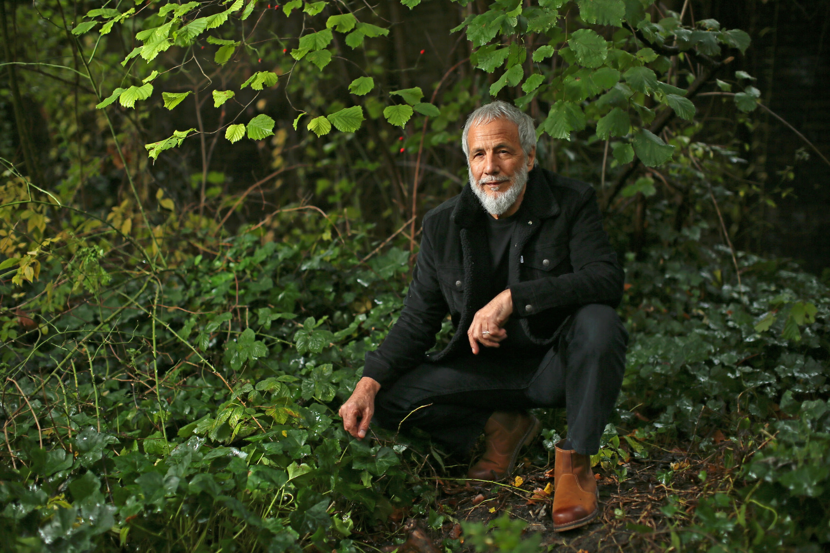 "Yusuf / Cat Stevens New Album ""Tea for the Tillerman2"" Out Now"